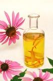 De essentiële olie van Coneflower in fles Stock Foto