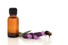 De Essentie van het Kruid van de lavendel stock afbeeldingen