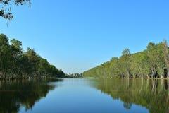 De eucalyptus was geboren op de banken van de stroom stock afbeelding