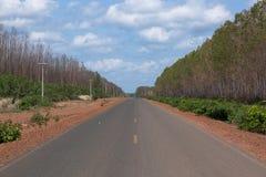 De eucalyptusaanplanting vervangt Cerrado in Piaui royalty-vrije stock foto