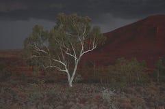 De eucalyptusboom van de spookgom in onweer bij nacht Stock Foto