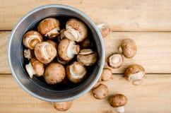 De Europese champignonsoep van het voedselconcept met de reeks van de champignonpaddestoel Stock Afbeelding