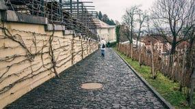 De Europese droevige stad van het de winterlandschap een vrouw loopt in de regen op de bestrating Seizoengebonden depressie royalty-vrije stock fotografie
