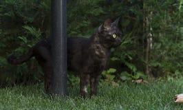 De Europese kat ontspant in de tuin Royalty-vrije Stock Afbeeldingen