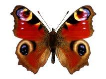 De Europese vlinder van de Pauw (Inachis io) stock foto's