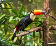 De exotische papegaaien zitten op een tak Stock Foto
