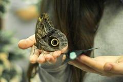 De exotische vlinder zit op een meisjes` s hand Royalty-vrije Stock Foto's