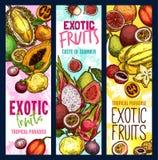 De exotische vruchten vector tropische banners van de fruitschets vector illustratie