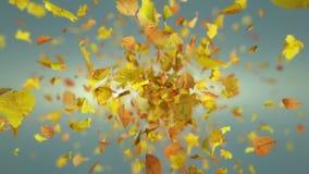 De exploderende herfst doorbladert achtergrond stock video