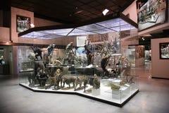 De expositie van de primaat stock afbeelding