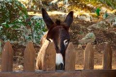 De ezel drijft binnen bijeen stock fotografie