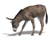 De ezel geeft terug stock illustratie