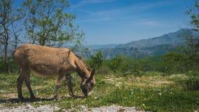 De Ezel van Dubrovnikkroatië royalty-vrije stock foto's