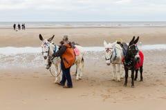 De ezels van de strandrit bij het strand op een bewolkte dag Stock Foto's