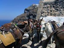 De ezels van Santorini Stock Afbeeldingen