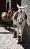De ezels van Santorini Stock Foto