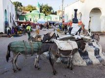 De ezels wachten om op marktvierkant in stad van Jugol worden geladen Harar ethiopië Royalty-vrije Stock Afbeeldingen