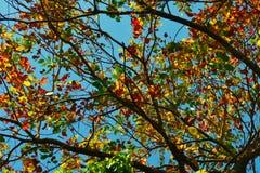 De färgglade fruncherna av ett träd på tillfället av våren skapa en härlig bakgrund royaltyfri foto