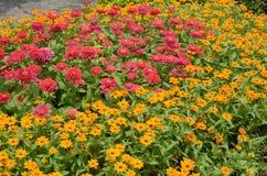 De färgrika blommorna i täpporna Arkivfoton