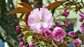 De första blommablomningarna Royaltyfri Bild