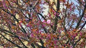 De första blommablomningarna Fotografering för Bildbyråer