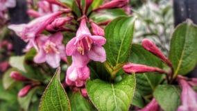 De första blommorna av sommar i UK arkivbild