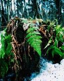 De första gräsplanerna i vintern royaltyfria foton