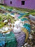 De första lilla snögubbearna i vår gård royaltyfria bilder