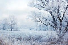 De fabelachtige winter Royalty-vrije Stock Afbeeldingen