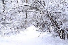 De fabelachtige winter in het bos Royalty-vrije Stock Foto