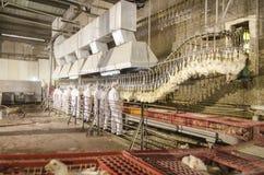 De fabriek van de kip Stock Afbeelding