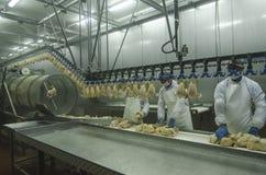 De fabriek van de kip Stock Fotografie