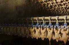 De fabriek van de kip Royalty-vrije Stock Afbeeldingen