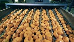 De fabrieksvervoerder vestigt aardappelknollen opnieuw stock video