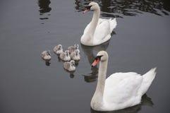 De Familie Stock Fotografie