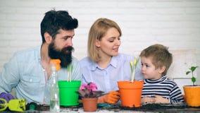 De familie communiceert en installatiebloemen in potten Concept het tuinieren Het planten van bloemen stock footage
