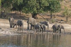 De familie die van de olifant een koele drank heeft Stock Foto's