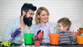 De familie is goed bij het planten van bloemen in potten in de zomer Het planten van bloemen stock video
