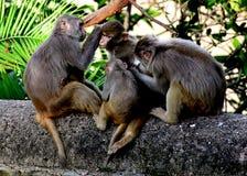 De familie van de aap Onze baan moet van elkaar houden zonder het onderzoeken al dan niet zij waardig zijn stock foto