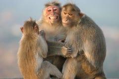 De familie van de aap Stock Fotografie