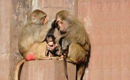 De familie van de aap royalty-vrije stock afbeeldingen