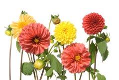 De familie van de bloem Stock Foto's