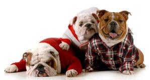 De familie van de hond Royalty-vrije Stock Afbeelding