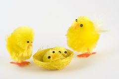 De familie van de kip Stock Afbeelding