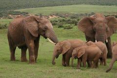 De familie van de olifant Royalty-vrije Stock Foto's
