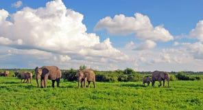 De familie van de olifant in Afrikaanse savanne royalty-vrije stock fotografie