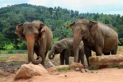 De familie van de olifant in de wildernis stock fotografie
