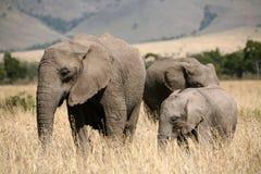 De familie van de olifant in het gras royalty-vrije stock foto