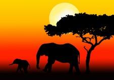 De familie van de olifant het lopen Royalty-vrije Stock Afbeelding