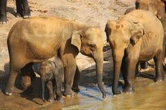 De familie van de olifant met baby bij de bank van de rivier Stock Foto's